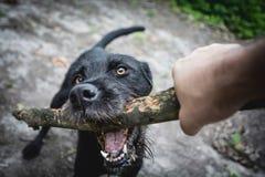 Speelse hond Stock Fotografie