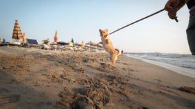 Speelse hond op het strand die van het zand genieten Stock Foto's