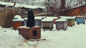 Speelse jonge bastaarde hond op ketting in sneeuw kennel stock video