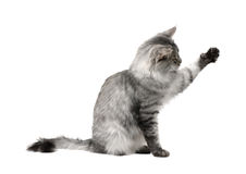 Speelse kat stock foto's