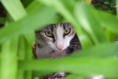 Speelse kat in een kader van bladeren royalty-vrije stock foto's