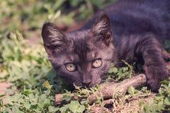 Speelse kat in openlucht in retro fotoeffect Royalty-vrije Stock Foto