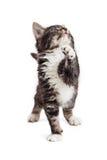 Speelse Kitten Raising Paw Looking Up stock fotografie