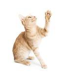 Speelse Kitty Raising Arm om te slaan stock foto's