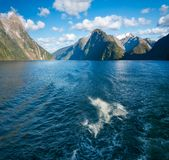 Speelse Ogenblikken - Dolfijnen die bij Milford-Geluid zwemmen Stock Afbeeldingen