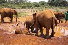 Speelse olifanten Stock Afbeelding