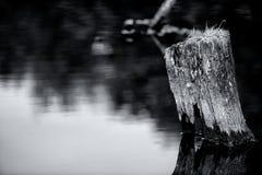 Spegel på sjön Arkivbild
