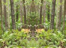 Spegelförsedda hjortar i skogen Arkivbild