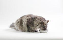 Speicherung der Katze Stockbilder