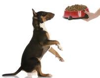 Speicherung des Hundes Stockbilder