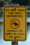 Speisen Sie nicht Enten lizenzfreies stockfoto
