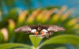 Spektakulär härlig fjäril på bladet av en växt Arkivfoton
