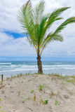 Spektakulär och mäktig paradisstrand på Itacaren Fotografering för Bildbyråer