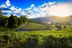 Spektakulär solnedgång över de gröna vingårdarna av Langa Piedmont Fotografering för Bildbyråer