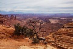 Spektakulära landskap av den Canyonlands nationalparken i Utah, USA Royaltyfri Fotografi