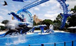 Spektakularni delfiny skacze wszystko przy once fotografia stock