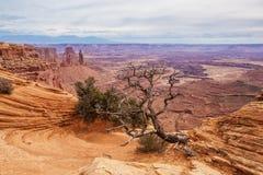 Spektakularni krajobrazy Canyonlands park narodowy w Utah, usa Zdjęcie Royalty Free