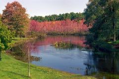 Spektakularny kolorowy spadku ulistnienie w Nowa Anglia Zdjęcie Royalty Free