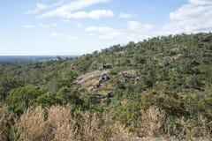 Spektakularny lasu krajobraz w John Forrest parku narodowym fotografia stock