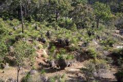 Spektakularny lasu krajobraz w John Forrest parku narodowym fotografia royalty free