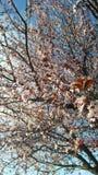 Spektakularny menchii kwiaty zdjęcia stock