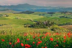 Spektakularny wiosny Tuscany krajobraz, piękny pole czerwoni maczki i typowy kamienia dom blisko Siena turystycznego miasta, Pien fotografia royalty free