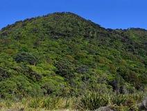 Spektakulär och ofördärvad infödingBush panorama på den Kapiti ön Royaltyfri Foto