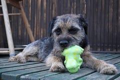 Spel van een hond stock foto