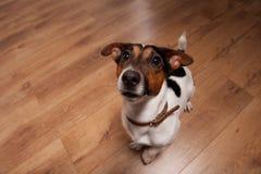 Spela den roliga hunden Arkivfoto