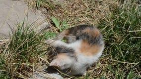 Spela den roliga kattungen arkivfilmer