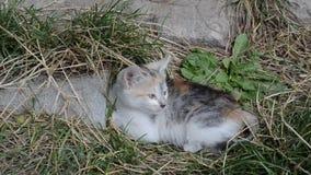Spela den roliga kattungen stock video
