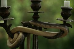 Spela det som är säkert Orm som slås in runt om ljusstaken på naturen Stilleben med den utomhus- kandelaber och ormen Gudom och Royaltyfri Foto