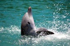 Spela för delfin Fotografering för Bildbyråer