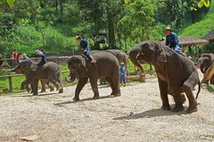 Spela för elefant Royaltyfri Fotografi
