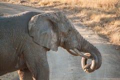 Spela för elefant Royaltyfria Foton