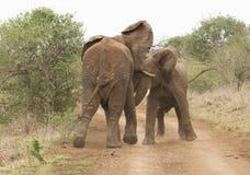 Spela för elefanter arkivfoto