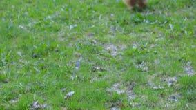 Spela för hundyorkshire terrier lager videofilmer