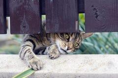 Spela för katt Arkivfoto