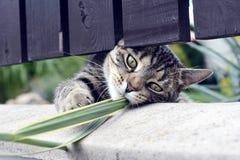 Spela för katt Royaltyfria Foton