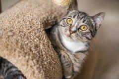 Spela för katt Royaltyfri Fotografi
