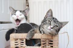 Spela för kattungar för liten syster Royaltyfria Foton