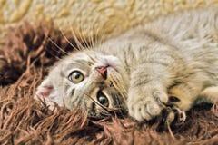 Spela för kattunge Royaltyfria Bilder