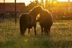 Spela för två ponnyer Arkivfoton