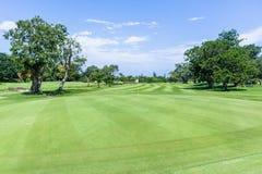 Spela golfboll i hål den gröna flaggan för golf scenisk kurs arkivbild
