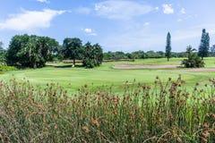 Spela golfboll i hål den gröna flaggan för golf scenisk kurs royaltyfria bilder