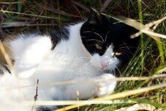 Spela katten i gräset Royaltyfri Bild