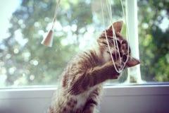 Spela kattungen Arkivfoto
