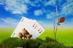 Spela kort med champinjoner, växt på mossa på ängen Arkivfoto