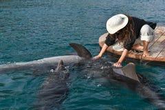 Spela med delfin Arkivfoto