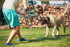 Spela med den farliga hunden Arkivfoto